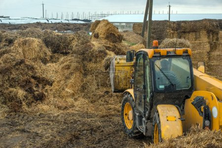 farming in Ukraine, harvesting, storage of silage, fodder for livestock