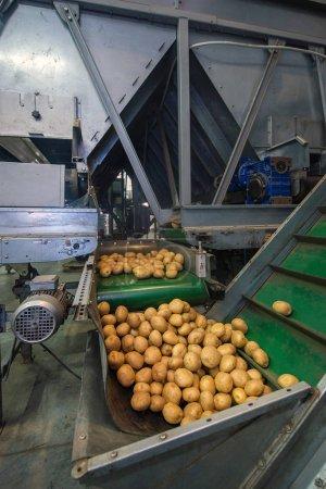 storage and sorting of potatoes, warehouses