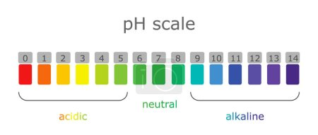 Ph scale with colored labels of environments and products