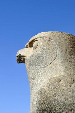 Photo pour Statue of falcon-headed god Horus at Ptolemaic Cult Temple of Edfu, Egypt, Africa - image libre de droit
