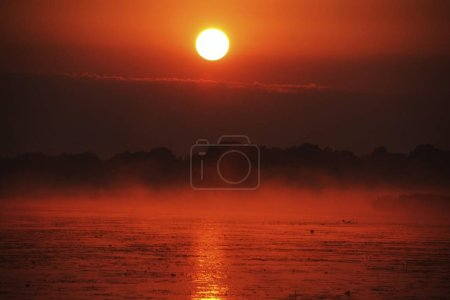 Photo pour Lac, Lever du Soleil, Lac Federsee, près de Bad Buchau, Bade-Wrttemberg, Allemagne, Europe - image libre de droit