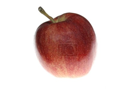 Photo for Red apple (Malus) close up view - Royalty Free Image