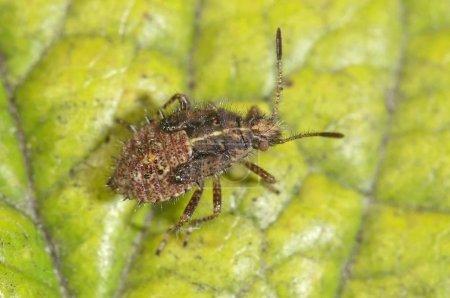 Photo pour Vue détaillée de la macro True Bug - image libre de droit