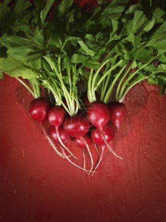 Photo pour Bouquet de radis vue rapprochée - image libre de droit