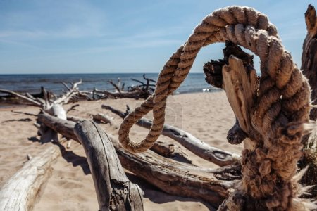 Scrap of wire and dead trees on the Kolka cape beach.