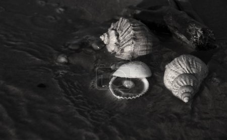 monochrome photo of seashell with pearl on sand