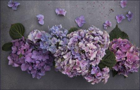 Foto de Composición floral de flores de hortensias púrpura sobre fondo gris shabby - Imagen libre de derechos