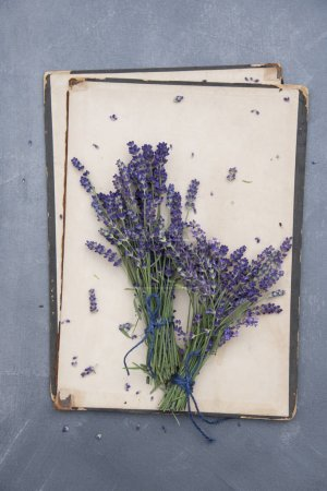 bunches of lavender flowers on vintage cover of book