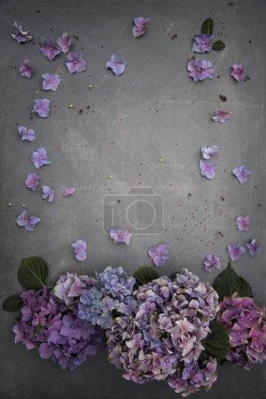 Photo pour Modèle floral avec des fleurs d'hortensia sur fond gris - image libre de droit