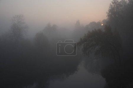 Photo pour Silhouettes d'arbres dans le brouillard mystère - image libre de droit