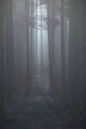 Photo pour Forêt broussailleuse avec rayons de soleil et brouillard - image libre de droit