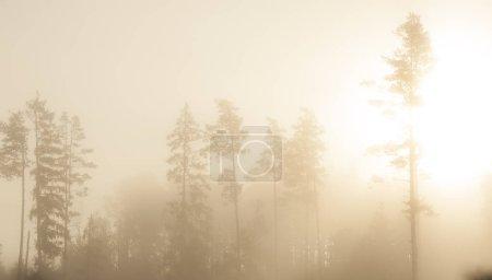 Photo pour Forêt mystérieuse avec des rayons de soleil comme arrière-plan - image libre de droit