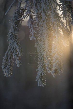 Photo pour Branches d'arbres sous les rayons du soleil en saison hivernale - image libre de droit