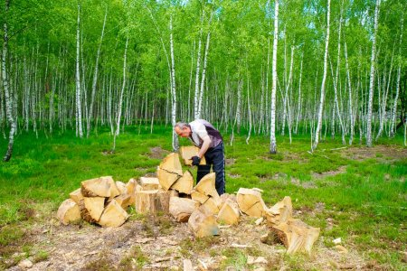 Photo pour The man 58 years old in the forestry is making oak logs in Ukraine in the summer. - image libre de droit