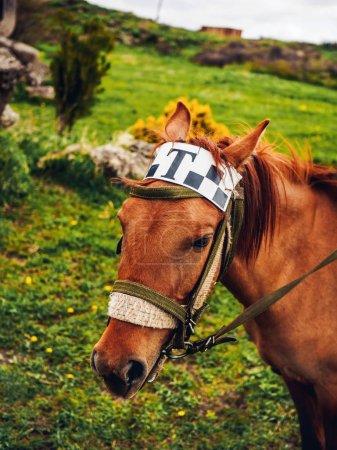 Photo pour Gros plan de cheval mignon avec taxi signe sur la tête, Arménie - image libre de droit