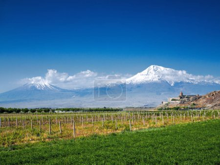 rows of green plants on agriculture field with mountains and castle on background, Armenia