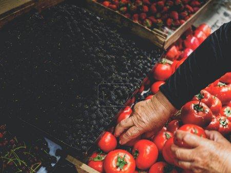 Photo pour Cropped image de tomates choisissant femme senior au marché géorgien - image libre de droit