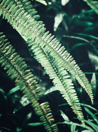 Close view of green tropical fern leaves in sunlight