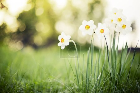 Hermosas flores en flor sobre fondo borroso