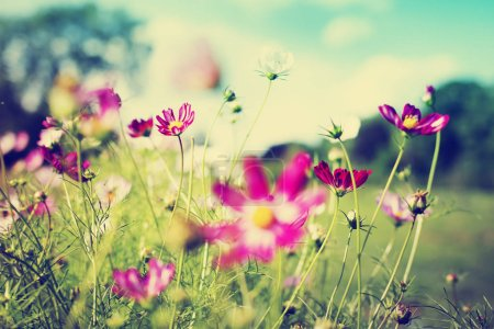 Photo for Cute little flowers on forest meadow - Royalty Free Image