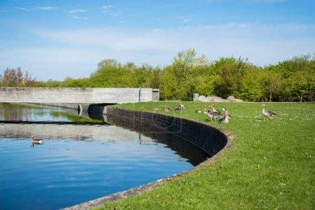 scenic view of city river and ducks on green lawn in copenhagen, denmark