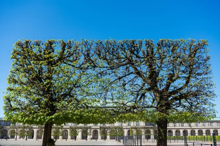 Photo for Urban scene with green trees and architecture in copenhagen, denmark - Royalty Free Image