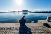 """Постер, картина, фотообои """"Молодая женщина с камерой, фотографирование Лебедь на набережной в Копенгагене"""""""
