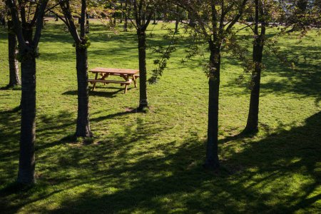 high angle view of empty wooden table and benches between beautiful trees in park, copenhagen