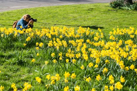 girl with camera photographing beautiful yellow daffodils