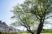 """Постер, картина, фотообои """"прекрасный зеленый дерево и исторической архитектуры в Копенгагене, Дания"""""""