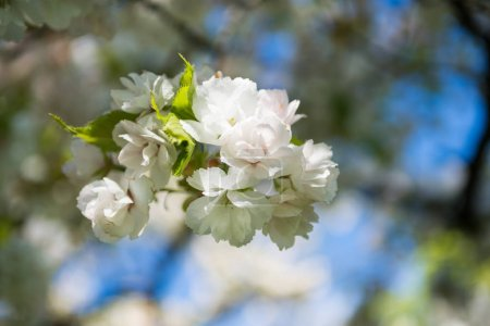 close-up view of beautiful blossoming tree branch, selective focus