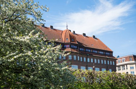 blossoming tree, green bushes and beautiful architecture in copenhagen, denmark