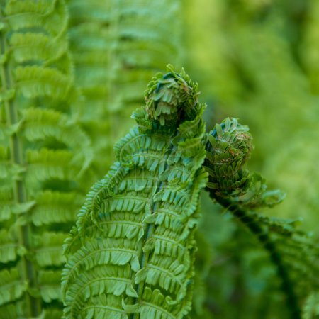 close up view of beautiful green fern on blurred background