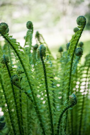 close up image of beautiful green fern on blurred background