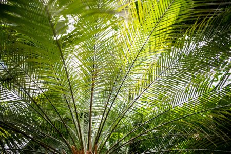 palm tree branches with green leaves and sunlight