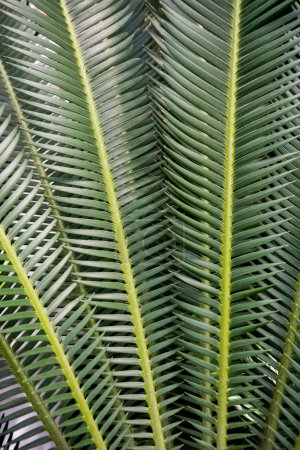 Photo for Full frame image of palm green leaves background - Royalty Free Image