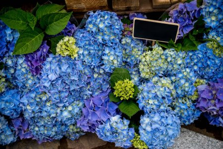 Foto de Cerrar vista de flores de hortensia azul hermoso con pizarra vacía - Imagen libre de derechos