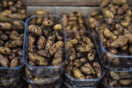 Photo pour Bouchent la vue des tas de pommes de terre dans des boîtes en plastique - image libre de droit