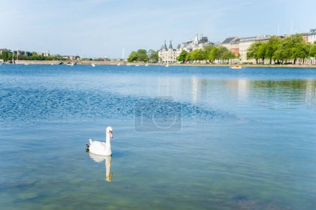 cityscape with river and swan in foreground in Copenhagen, Denmark