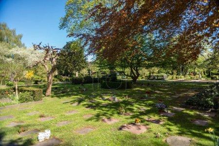 Photo pour Pelouse verte avec des arbres dans le jardin botanique de Copenhague, Danemark - image libre de droit