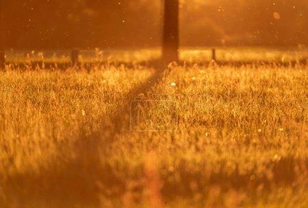 Spring meadow backlight in evening sun
