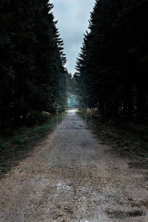 Photo for Empty path in dark forest. - Royalty Free Image