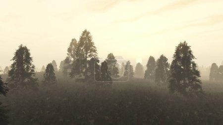Photo pour Forêt de pins brumeux à l'aube . - image libre de droit