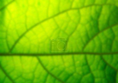 Foto de Cerrar vista de textura de hoja verde - Imagen libre de derechos