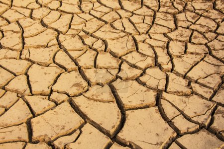 Photo for Dry soil cracked background - Royalty Free Image