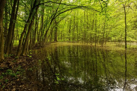 Photo pour Paysage avec belle forêt verte avec de l'eau pleine de feuilles en arrière-plan - image libre de droit