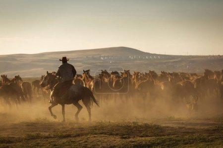 Photo pour Chevaux sauvages conduit par un cow-boy au coucher du soleil avec de la poussière en arrière-plan . - image libre de droit