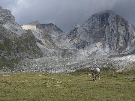 Photo pour Août 2018 le 19ème Senales vallée, trentino alto adige pays randonnée journée sur la montagne - image libre de droit