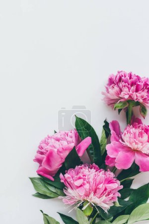 top view of pink peonies with leaves on white