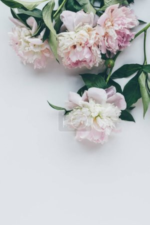 top view of light pink peonies with leaves on white